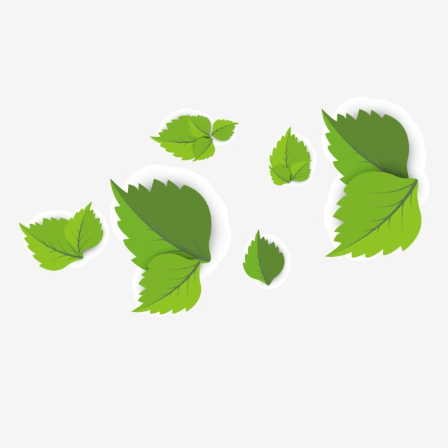 Png Leaf Border - Leaves Border, Plant, Green, Youth PNG Image and Clipart for Free ...