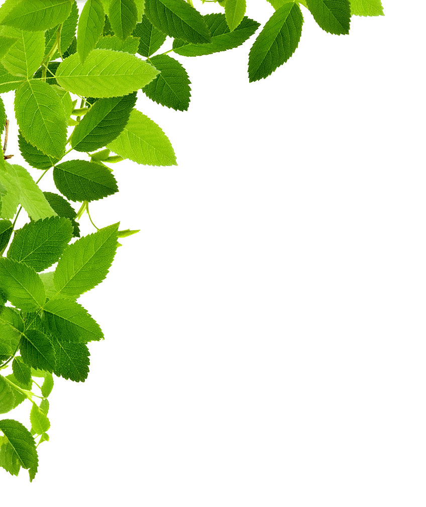 Png Leaf - Leaves Left Corner transparent PNG - StickPNG