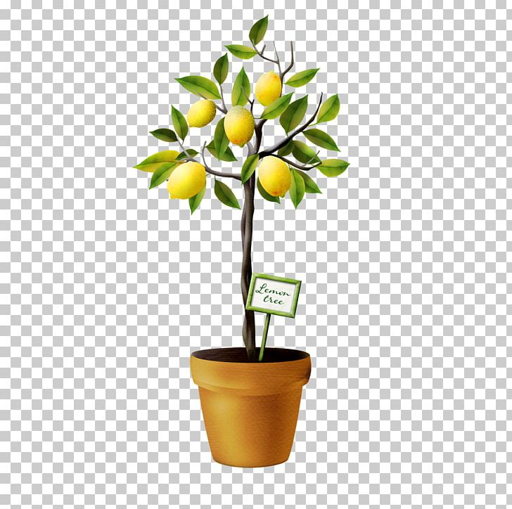 Lime Tree Png - Lemon Tree Auglis PNG, Clipart, Auglis, Drawing, Encapsulated ...