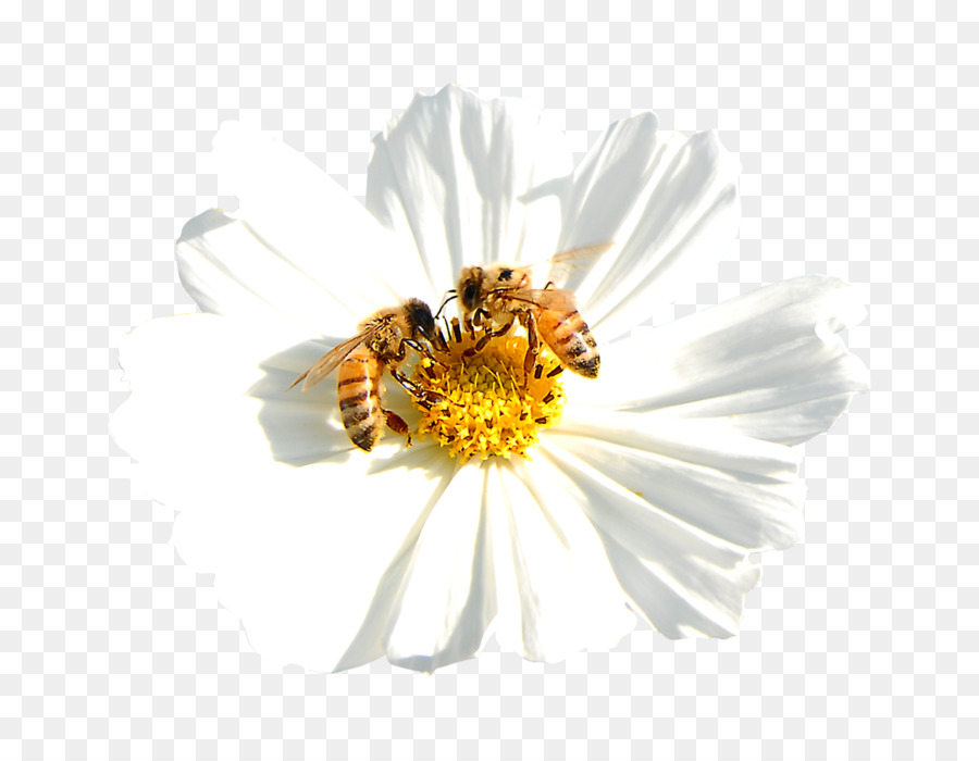 Flower And Bee Png & Free Flower And Bee png Transparent Images
