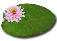Lily Pad Flower Clipart Png Images 258919 Png Images Pngio