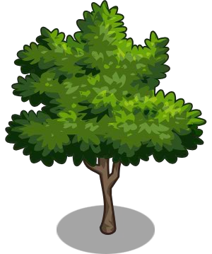 Lime Tree Png - Lime tree png 1 » PNG Image