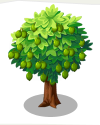 Lime Tree Png - Lime tree png 2 » PNG Image