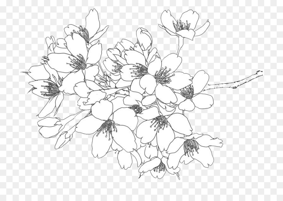 Line Drawing Flowers Png Download 800 602603 Png