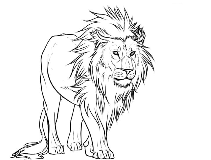 Lion Sketch Png Free Lion Sketch Png Transparent Images 137203 Pngio If you've never used charcoal. lion sketch png transparent
