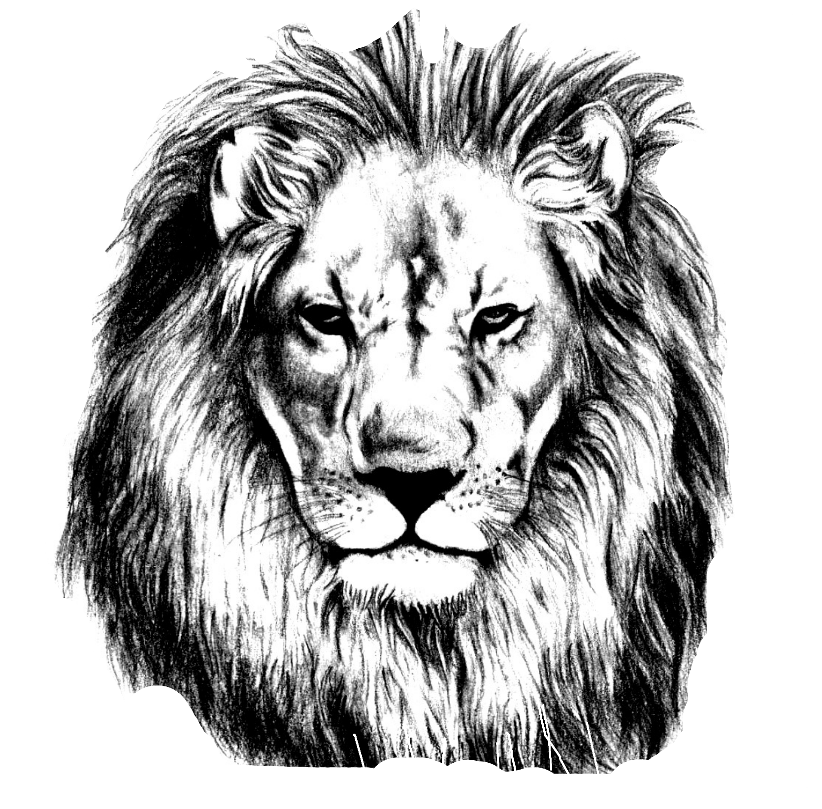 Lion Drawing Pencil Sketch Lions Head 2450885 Png Images Pngio