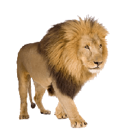 Lion Png - Lion Png Image Image Download Picture Lions PNG Image