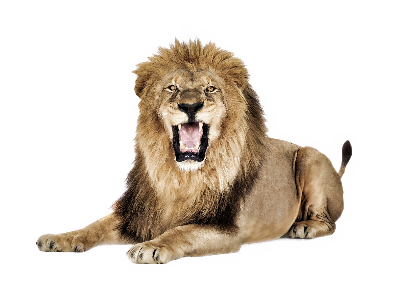 Lion Png - Lion Png PNG Image