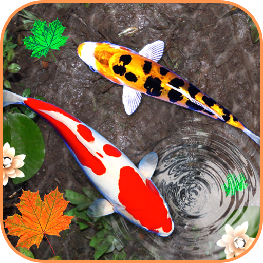 Koi Live Png For Pc Free Koi Live For Pc Png Transparent Images 61619 Pngio