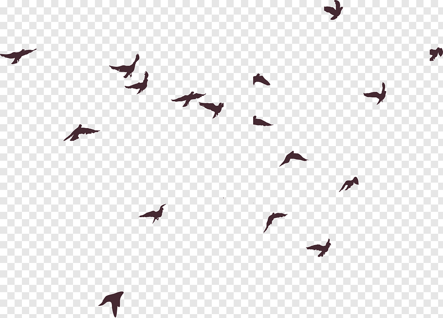 Sky Bird Png - Low angle graphy of flock of flying birds under blue sky, Bird ...
