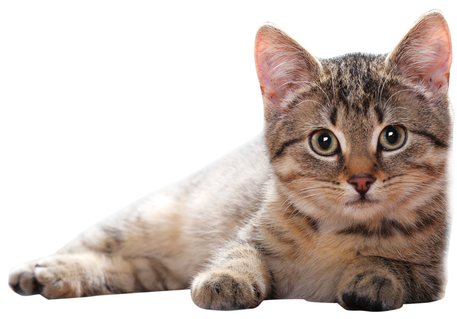 Cat Png - Lying Cat PNG PNG Image - PurePNG | Free transparent CC0 PNG Image Library