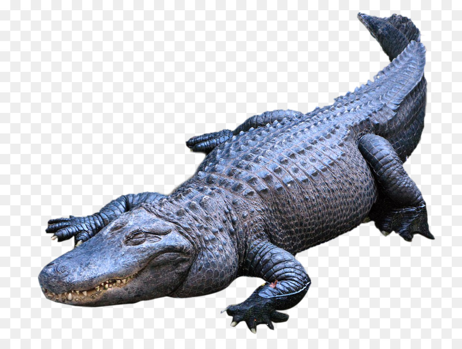 American Alligator Png - Magnifying Glass Clipart png download - 1200*900 - Free ...