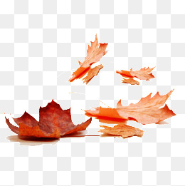 Free Fall Png - maple leaf, Fall, Leaves, Red Leaves PNG and PSD