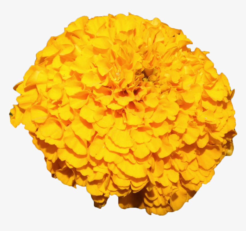 Yellow Flower Garland Png - Mexican Marigold Flower Yellow - Transparent Marigold Garland Png ...