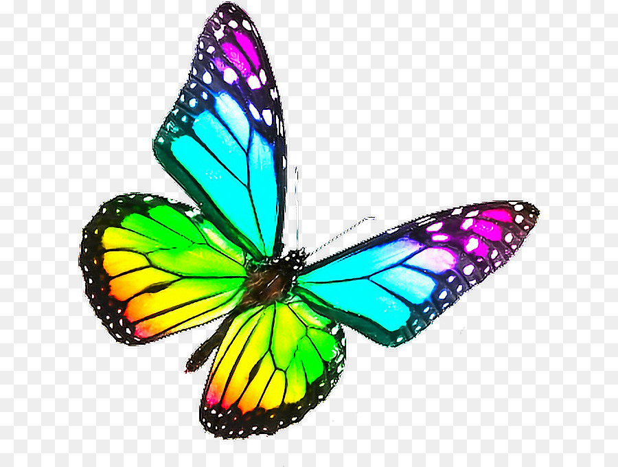 Rainbow Butterfly Png ...Clipart Flowers And Butterflies Border