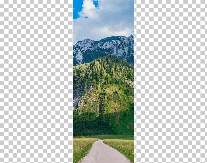 Mount Scenery Png - Mount Scenery Mountain Trail Walkway Wood PNG, Clipart, Austrian ...