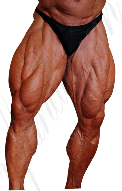 Leg Muscle Png - Muscle Anatomy - Legs Muscle - With different exercises ...