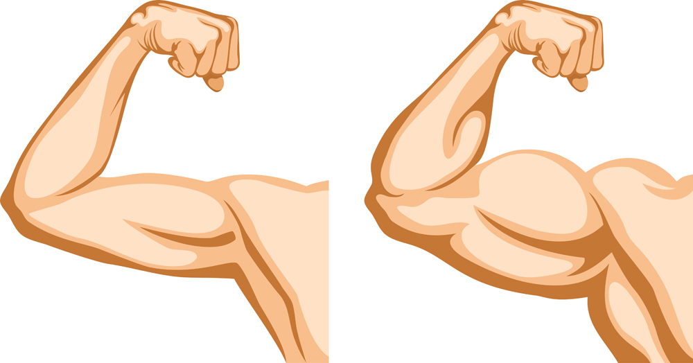 Muscle Arms Png - Muscle Arm Png (97+ images in Collection) Page 1