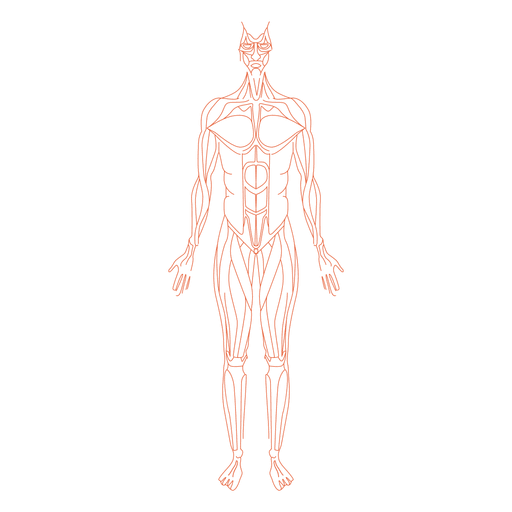 Anatomy Png - Muscles anatomy man - Transparent PNG & SVG vector