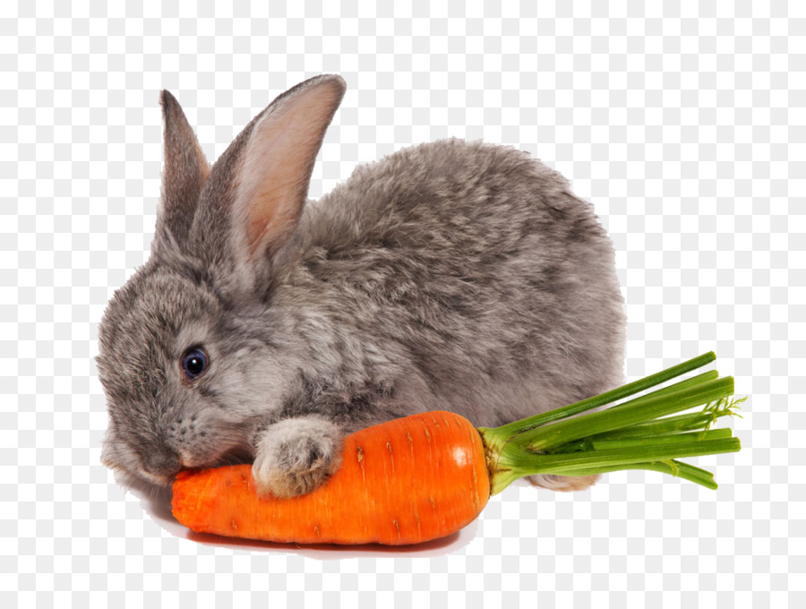 Rabbit Eating Png & Free Rabbit Eating.png Transparent ...