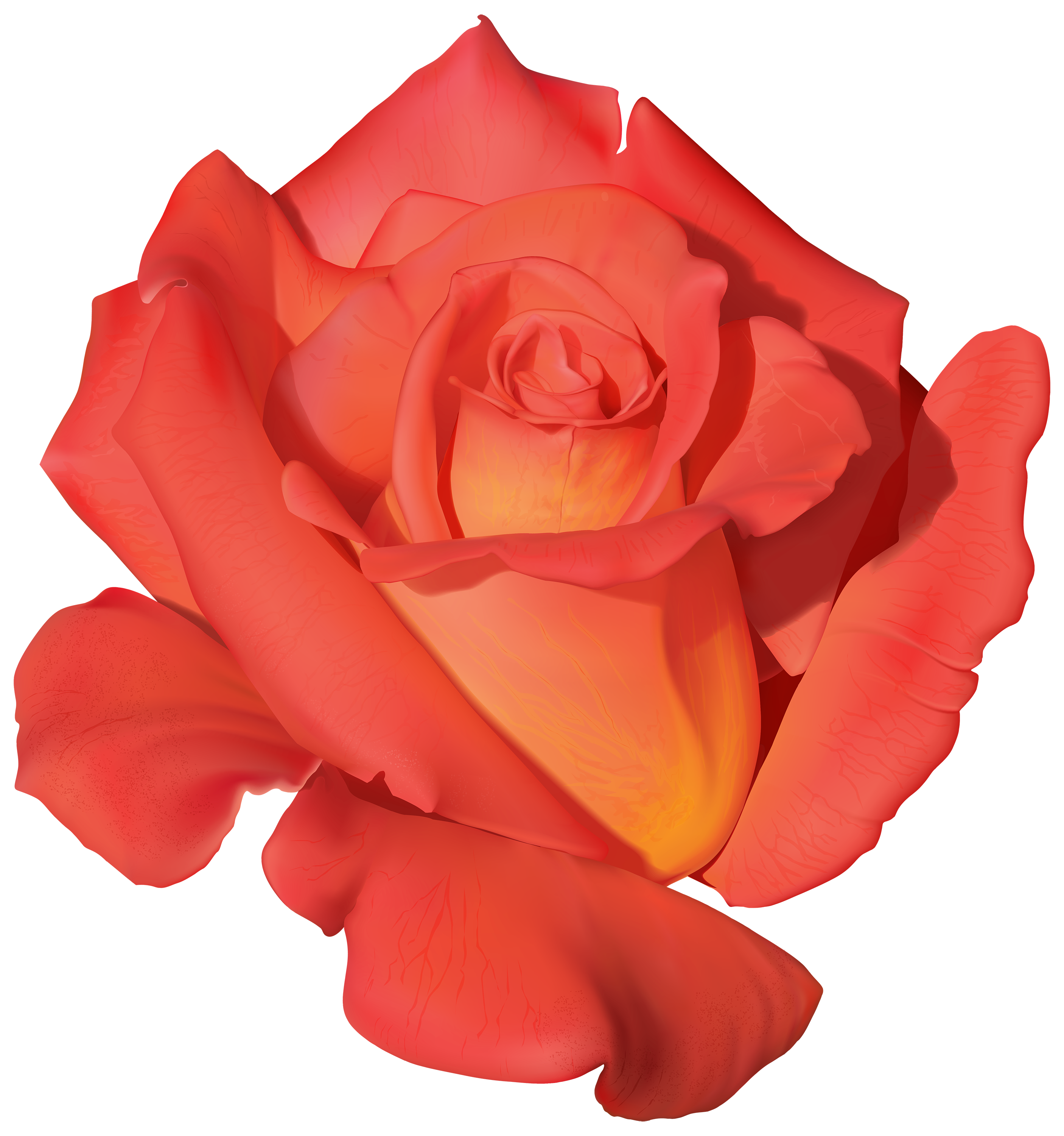 Tea Rose Png - Orange Rose PNG Clipart - Best WEB Clipart