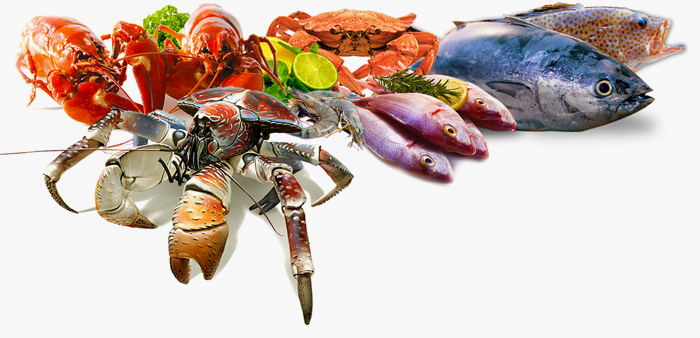 Fish And Seafood Png - Organizers Profile