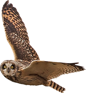 Flying Owl Png - Owl flying png, Picture #2022782 owl flying png