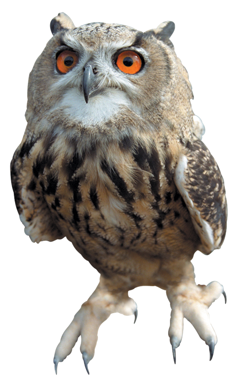 Png Images Of Owls - Owl Free Download PNG