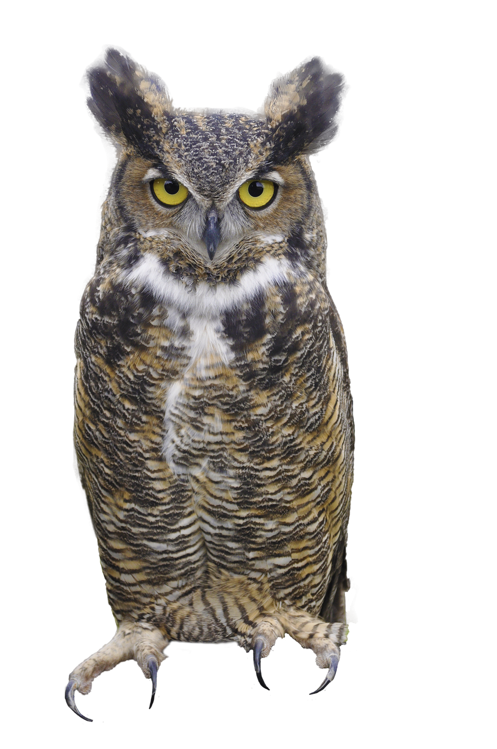 Png Images Of Owls - Owl Picture PNG Image - Images Owls PNG HD