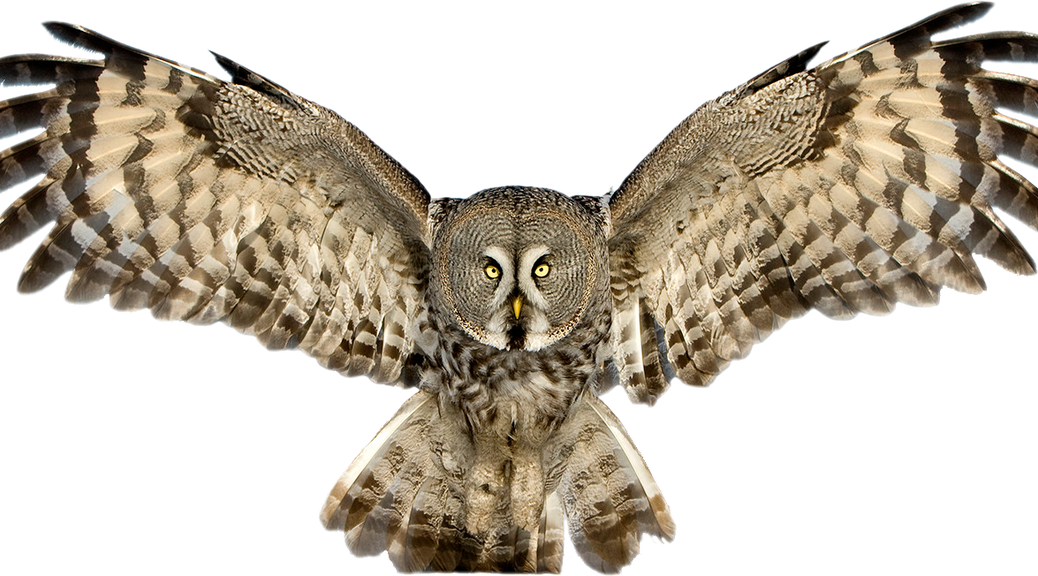 Png Images Of Owls - Owl PNG