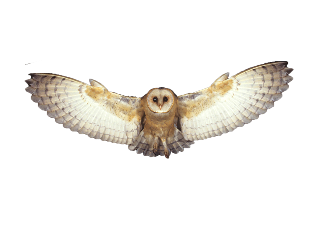 Flying Owl Png - Owls PNG images free download, bird owl PNG