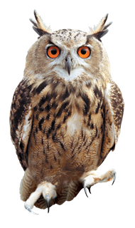 Images Of Owls Png - Owls PNG images free download, bird owl PNG