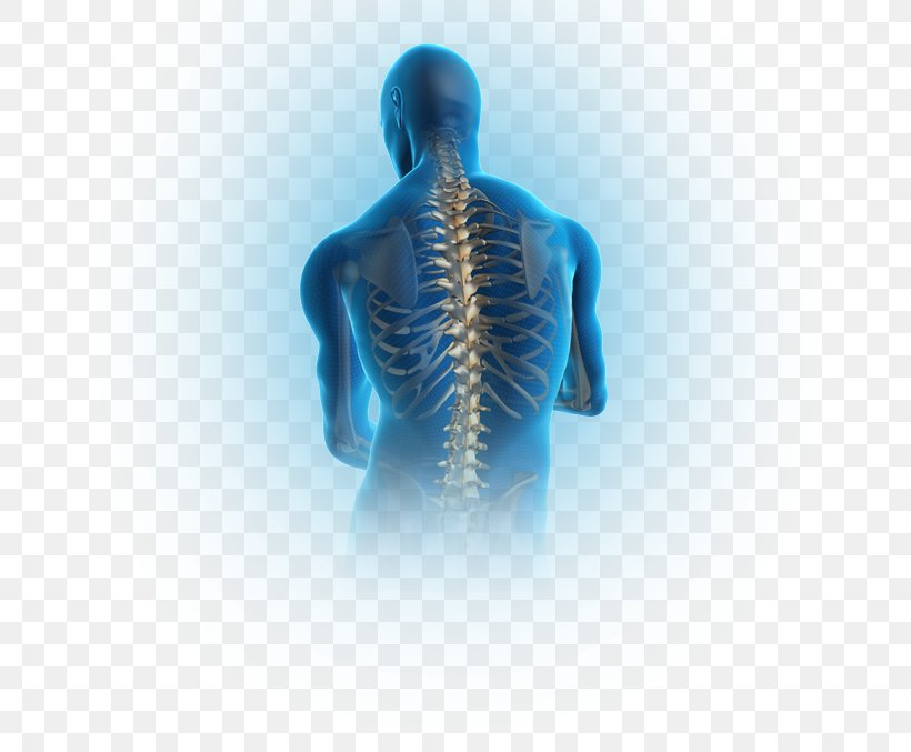 Pain In Spine Png Free Pain In Spine Png Transparent Images 123435 Pngio
