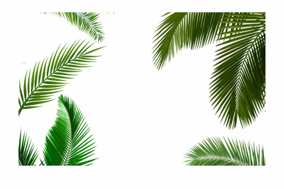 Tropical Background Png - Palm Leaf Clipart With A Transparent Background Clipart - Tropical ...