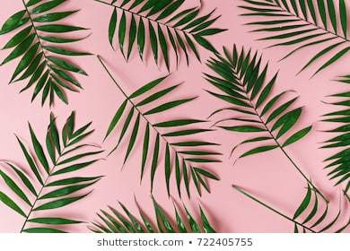 Palm Leaves Background Free Palm Leaves Background Png Transparent Images 42368 Pngio Download animated wallpaper, share & use by youself. palm leaves background png transparent
