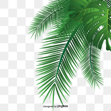 Tropical Leaves Png - Palm Leaves PNG Images   Vectors and PSD Files   Free Download on ...