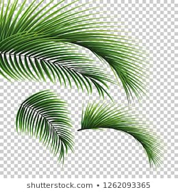 Palm Leaf Transparent Background Free Palm Leaf Transparent Background Png Transparent Images 44740 Pngio Search for more beautiful pictures and free images on picjumbo! palm leaf transparent background free
