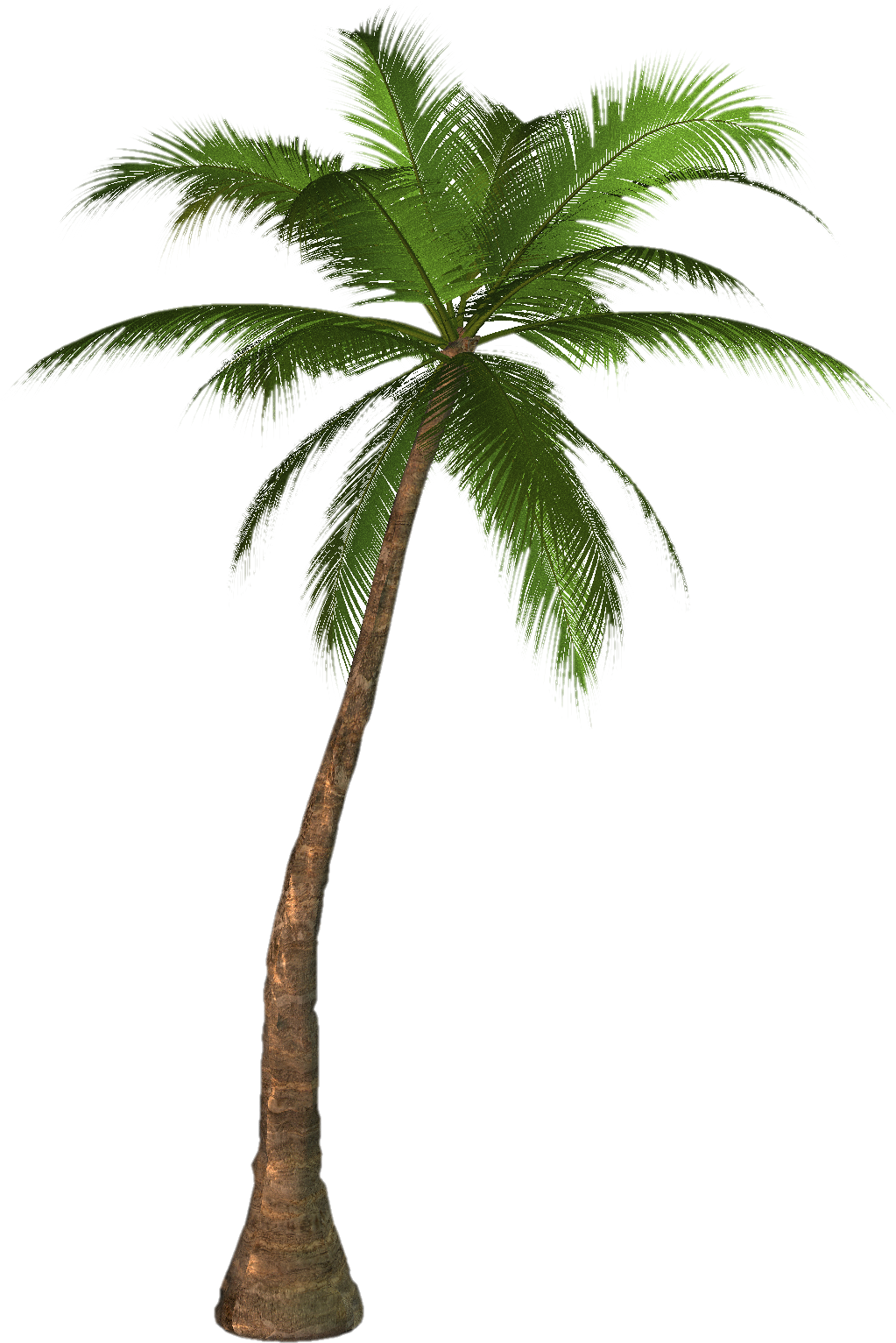 palm tree png transparent images 2724 pngio