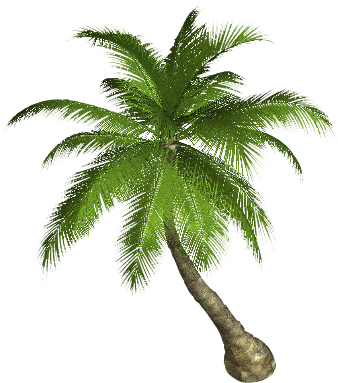 Dead Palm Tree Png - Palm Tree transparent PNG - StickPNG