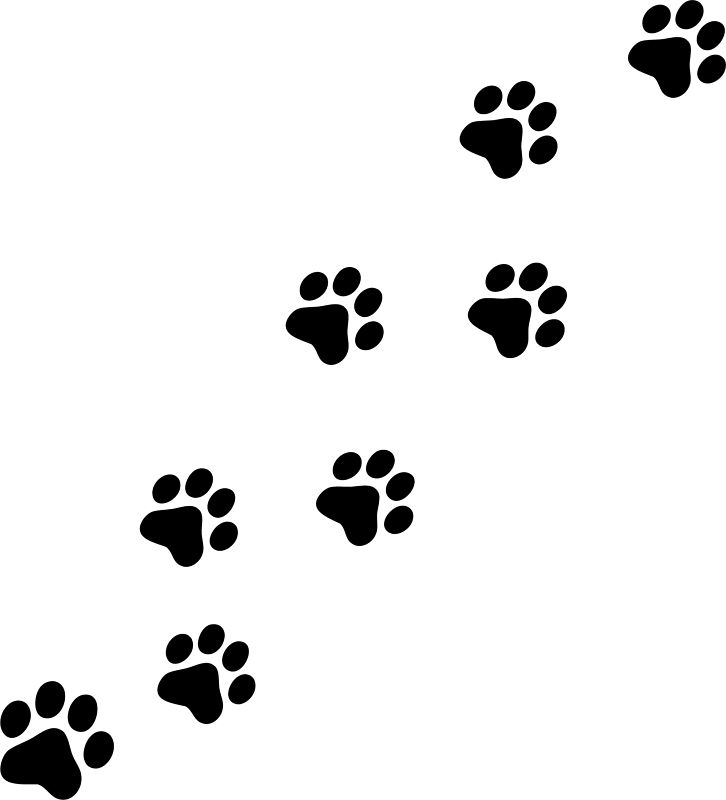 Black panther Paw Dog Tiger, pawpaw, fictional Characters, monochrome png |  PNGEgg