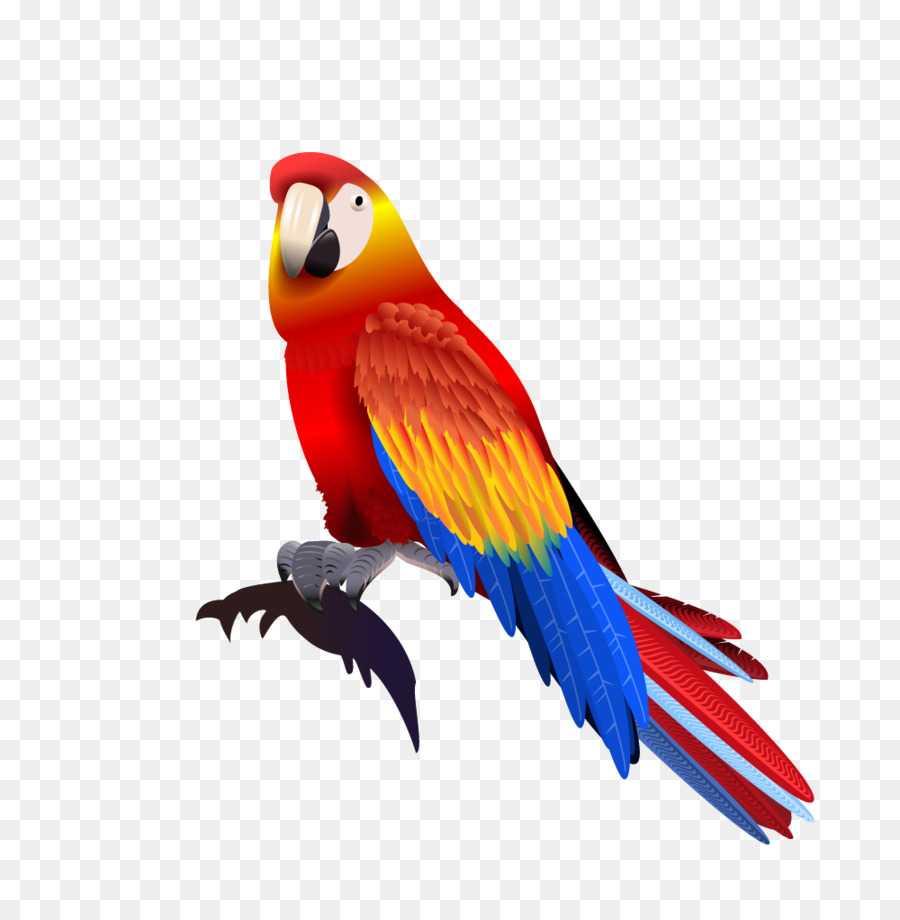 Macaw Png - Parrot Macaw - parrot