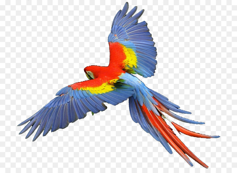 Macaw Png - Parrot Scarlet macaw Hyacinth macaw Clip art - parrots