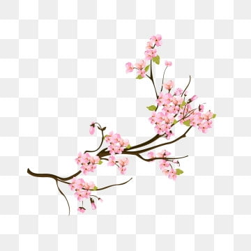 Flowering Peach Trees Png - Peach Flower PNG Images   Vector and PSD Files   Free Download on ...
