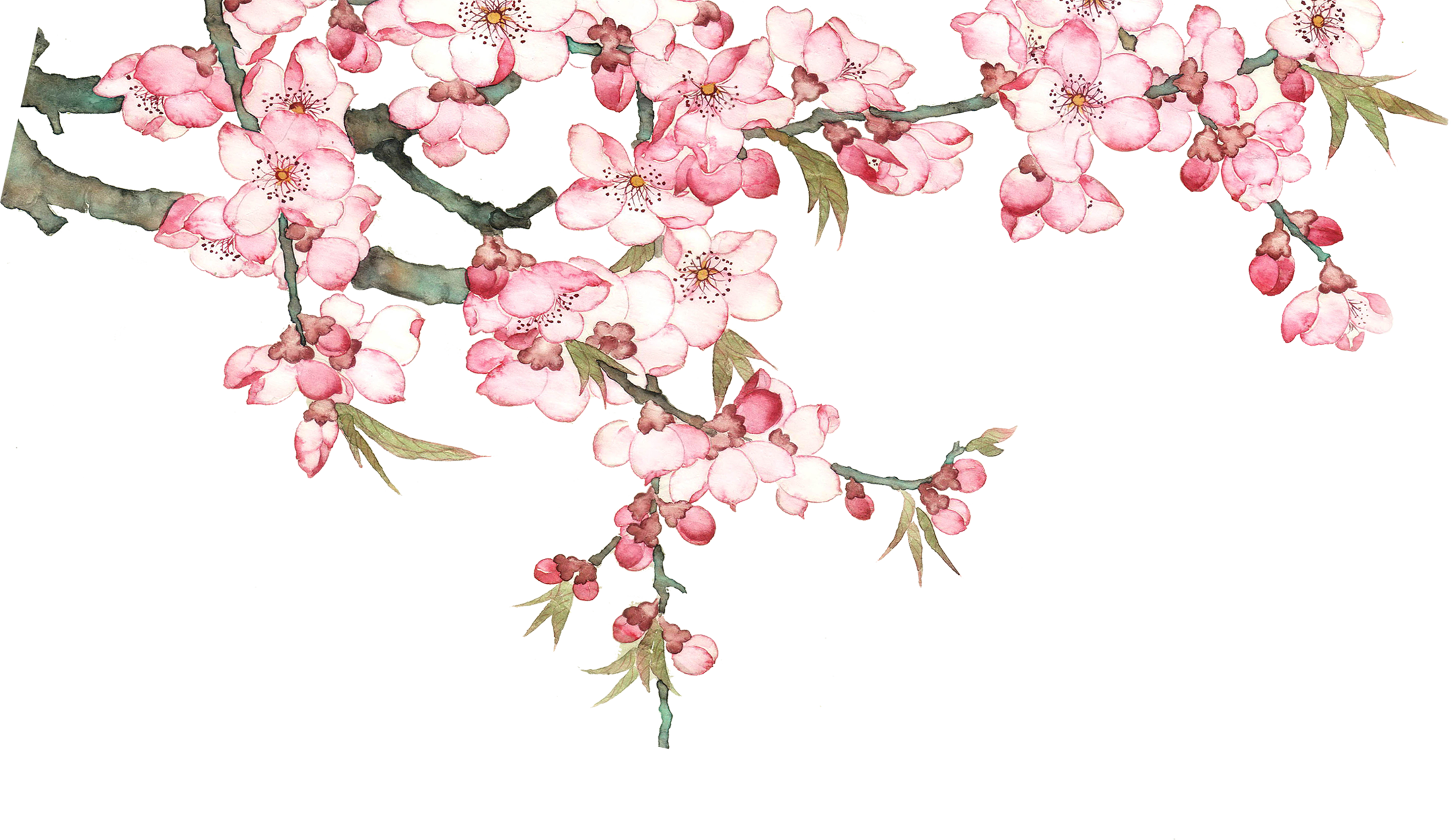 Flowering Peach Trees Png - Peach flowers png, Picture #634320 peach flowers png