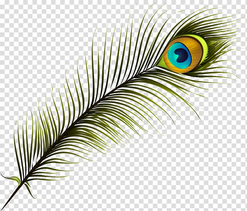 peacock feather illustration feather pe 1130740 png images pngio peacock feather illustration feather
