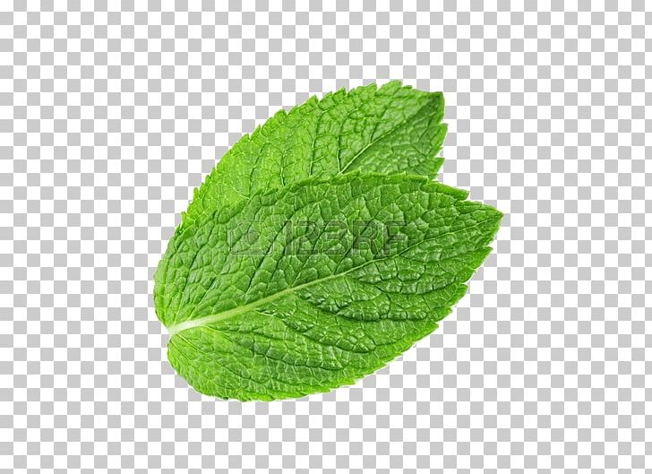 Water Mint Png - Peppermint Mentha Spicata Water Mint Leaf PNG, Clipart, Computer ...