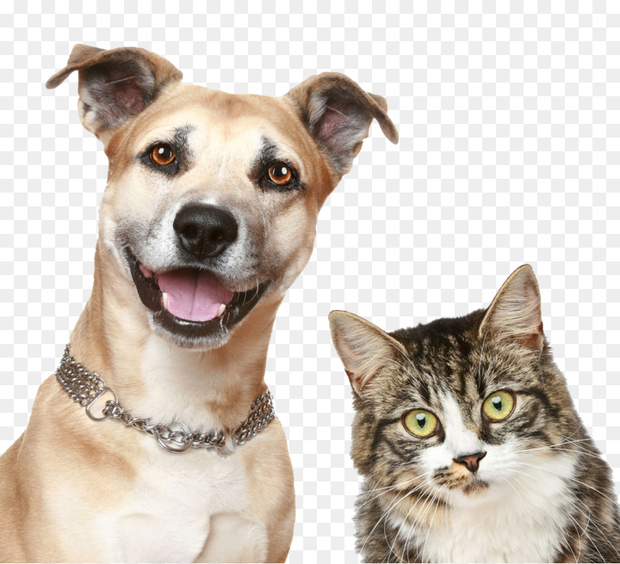Dog And Cat Png Free Dog And Cat Png Transparent Images 34993 Pngio