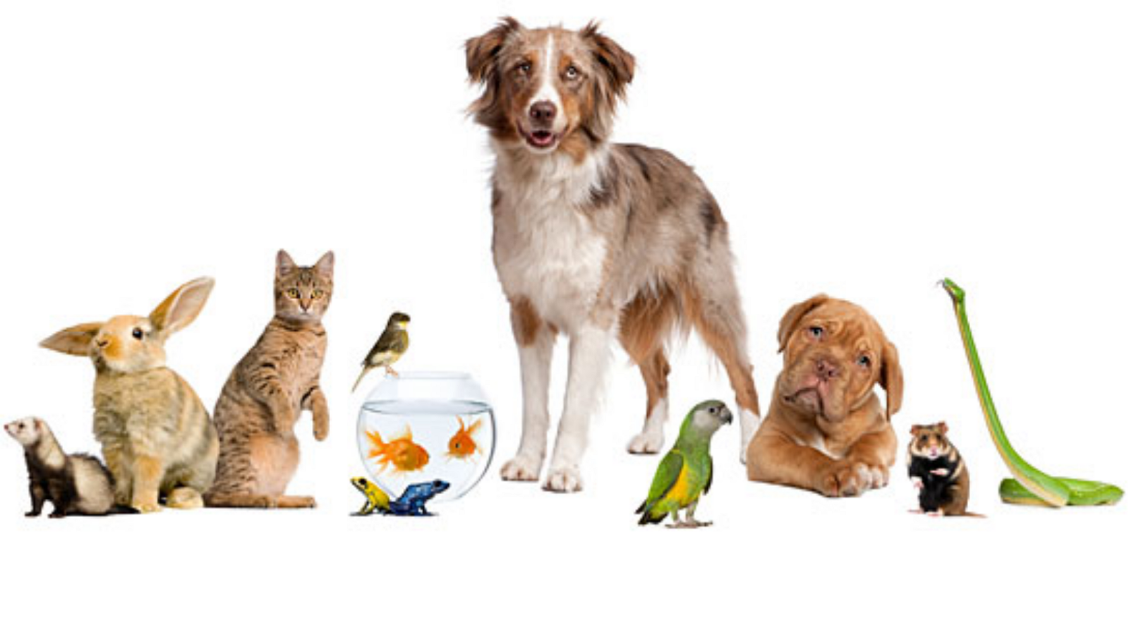 Pet Png Hd Transparent Pet Hd Png Images 1299605 Png Images Pngio
