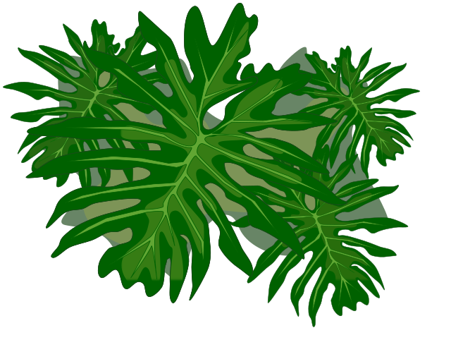 Philodendron Png - philodendron - /plants/assorted/P/philodendron.png.html