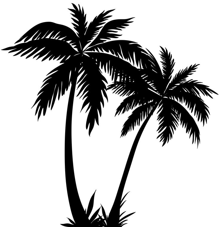 Black And White Png Palm Tree Free Black And White Palm Tree Png